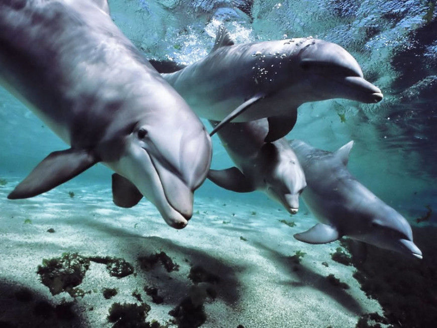 delfinci