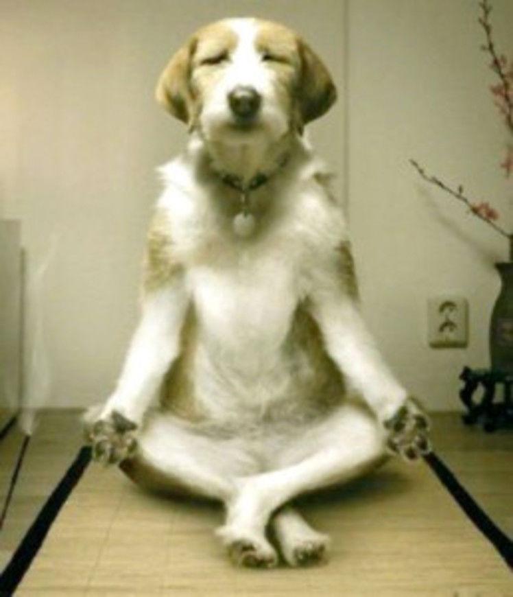 meditujicipes