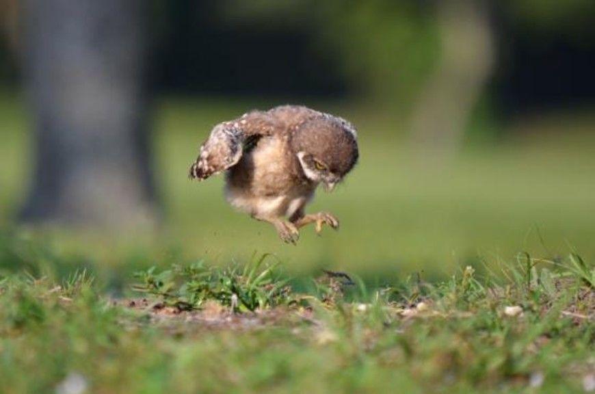ptzacek