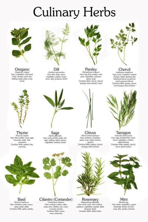 Wild Backyard Herbs : Dopln?me si stravu o zcela cerstv? potraviny i v pr?pade, ?e