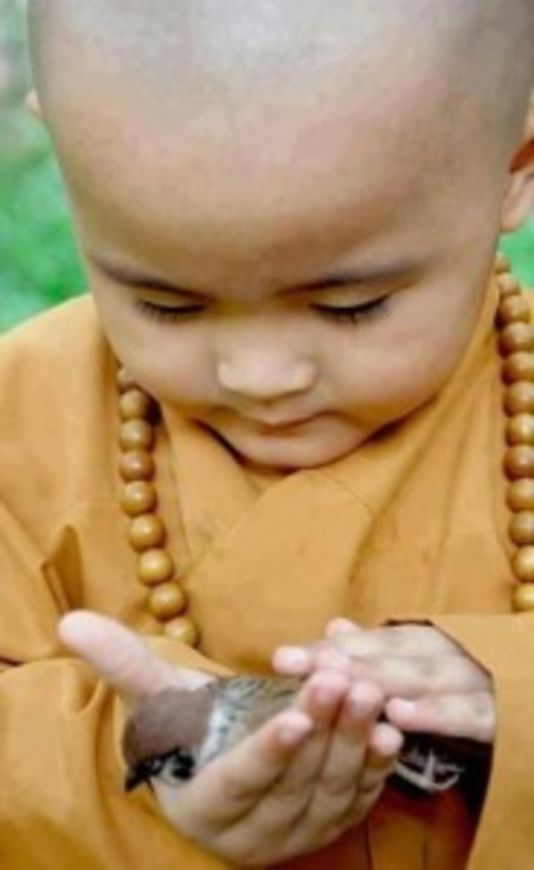 dite mnich