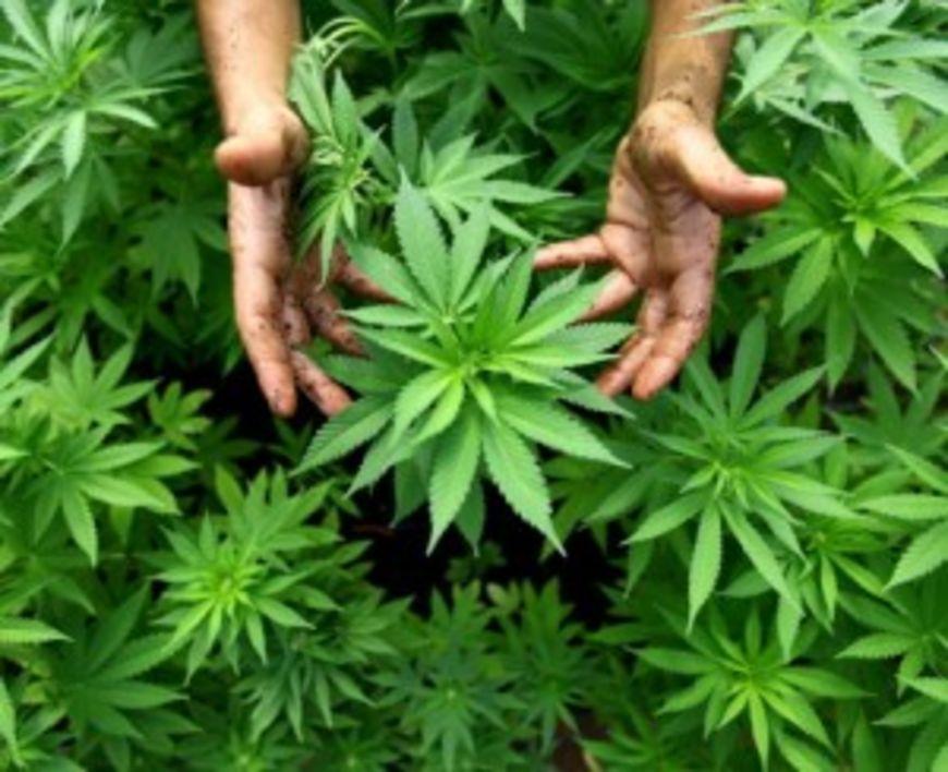 Colorado and Washington approve marijuana legalization