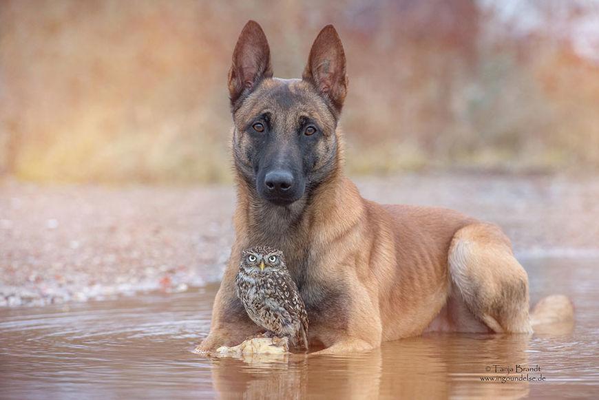 pes a sova11