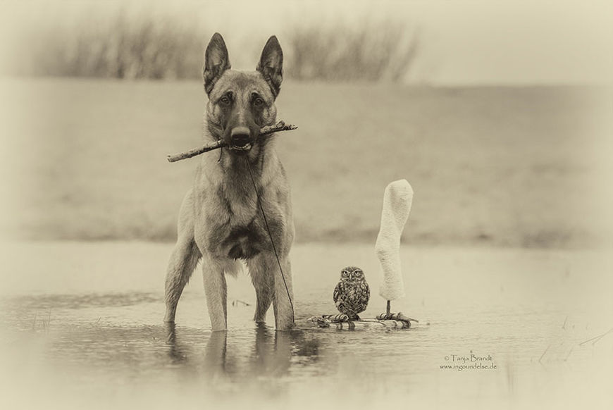 pes a sova13
