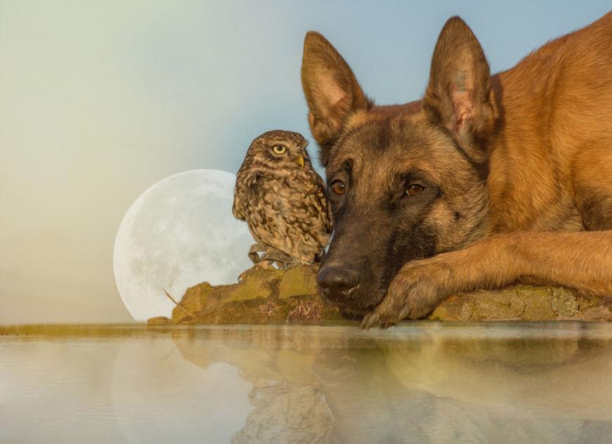 pes a sova15