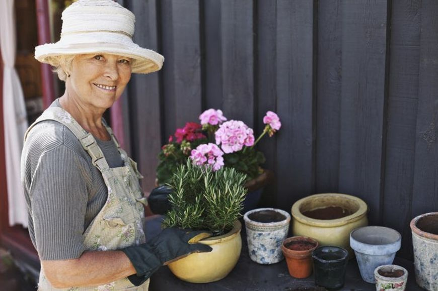 Active senior woman potting some plants in terracotta pots on a counter in backyard. Senior female gardener planting flowers in pots